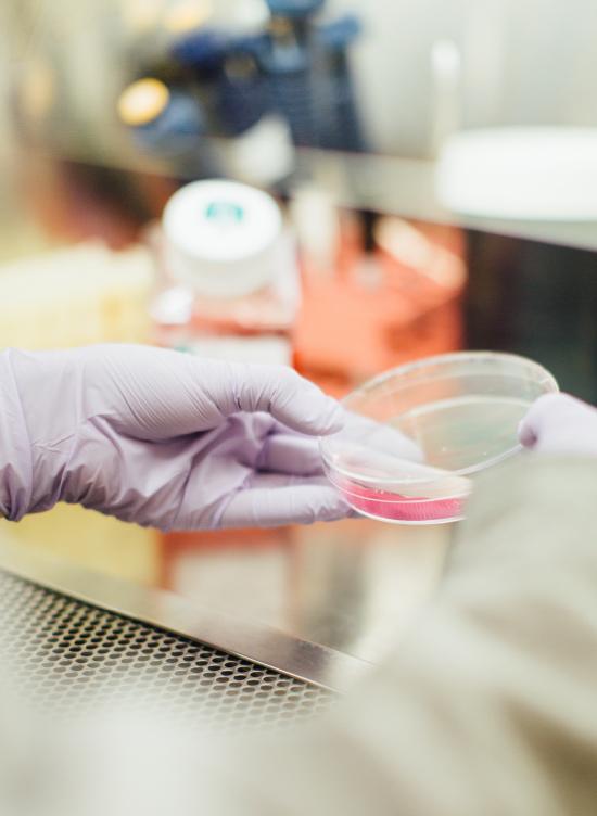 Linneo Health laboratorio extracto